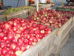 apple-bins