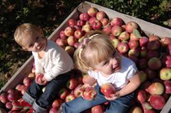 apple-girls