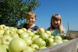 farming-kids_apples