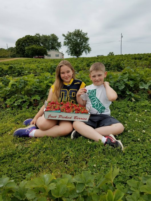 Strawberry Picking at Orrs