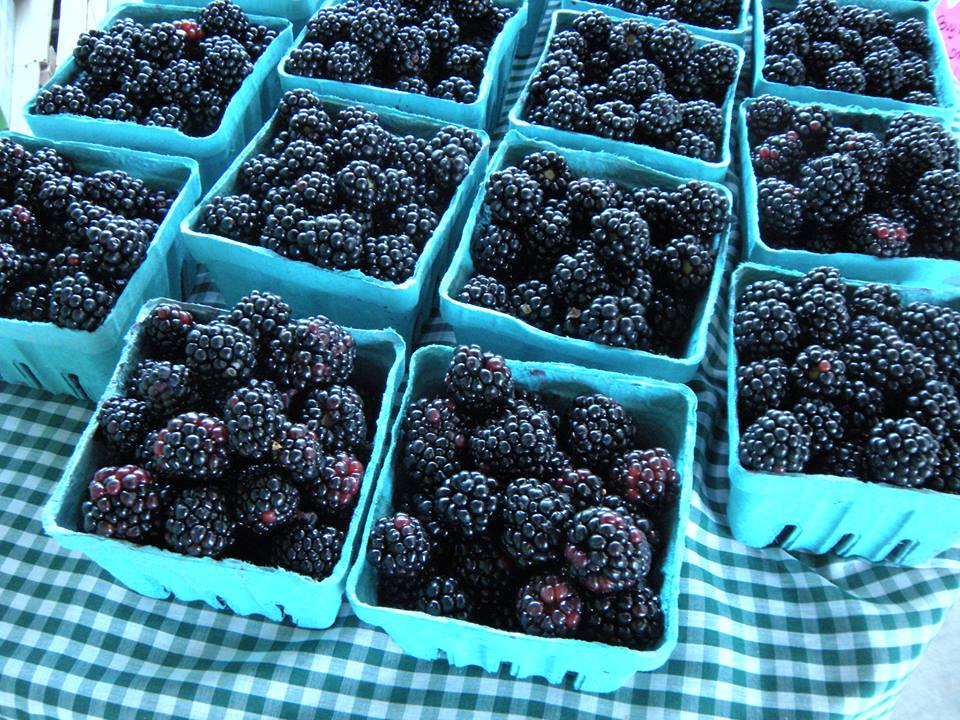 Orr's Blackberries