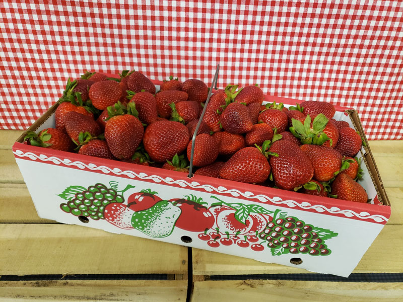 PYO Strawberries Peck Basket
