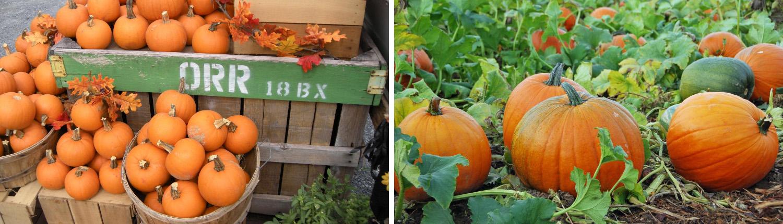 orrs-crates-pumpkins