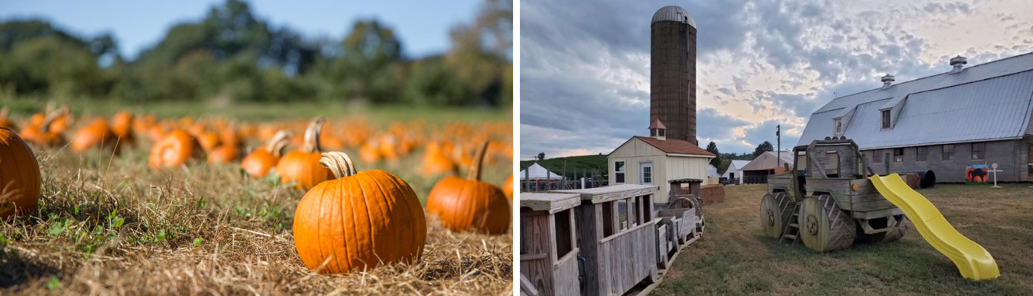 orrs-pumpkin-patch-playgound