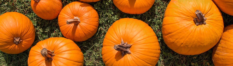 orrs-pumpkins