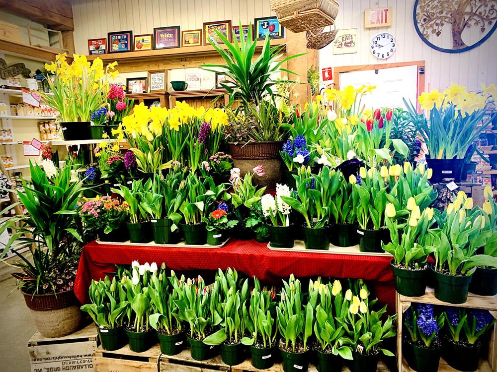 Orrs Flowers
